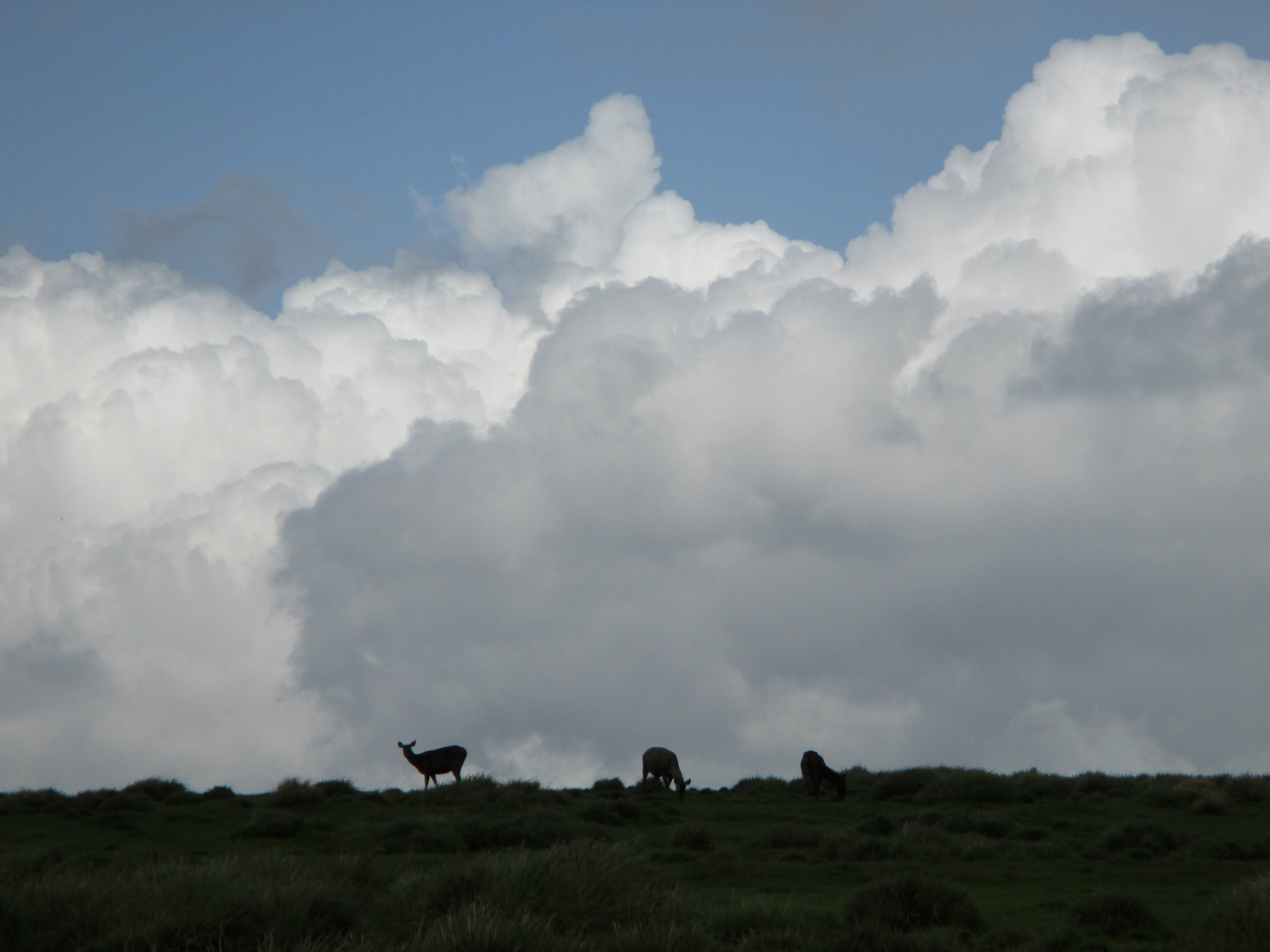 Horton Plains (1)