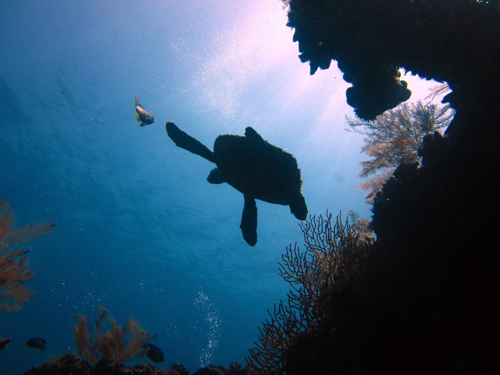 Diving in Tulamben, Bali (103)